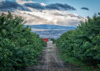 orchard with dramatic clouds above