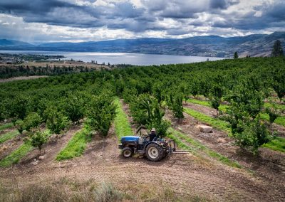 tractor in fruit orchard